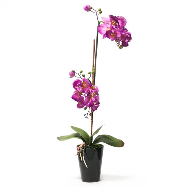 На фото: Орхідея In Garden (72691), Штучні квіти Home4You, каталог, ціна