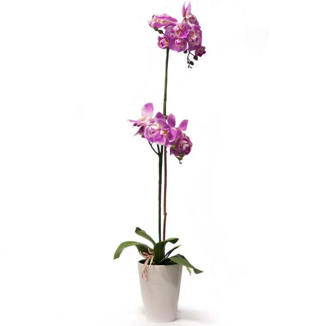 На фото: Орхідея In Garden (72693), Штучні квіти Home4You, каталог, ціна