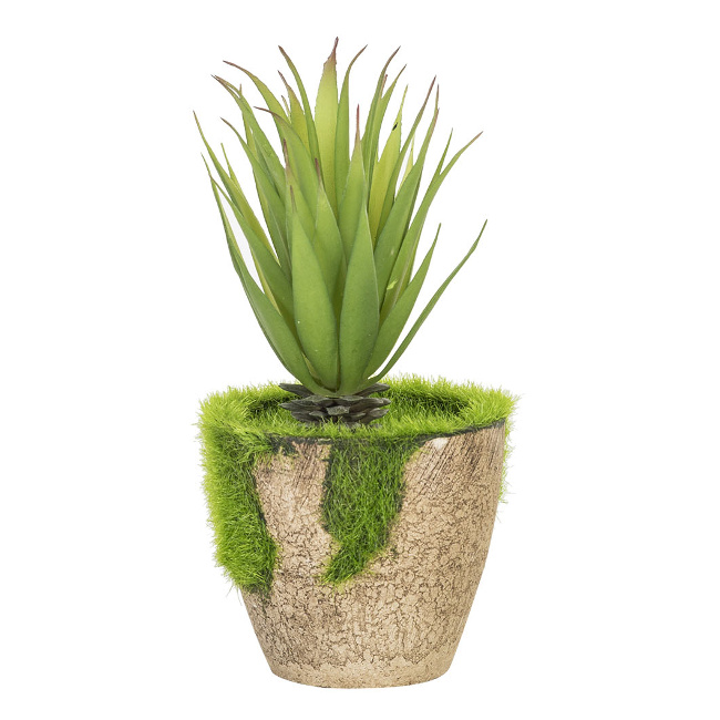 На фото: Кактус In Garden (77999), Штучні квіти Home4You, каталог, ціна